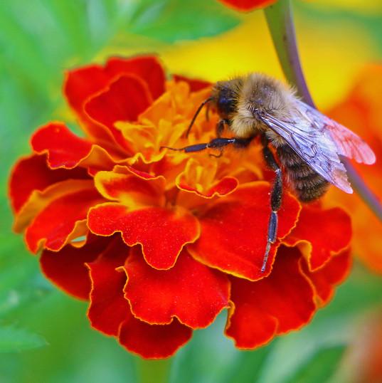 Bee Flower (1d)!!!.jpg