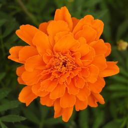 Flowers (7).jpg