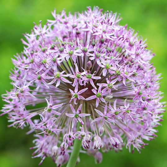 Best Flower Photos (18).jpg