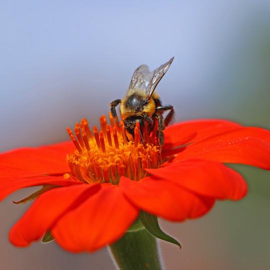 Best Bee Photo (2) !!.jpg