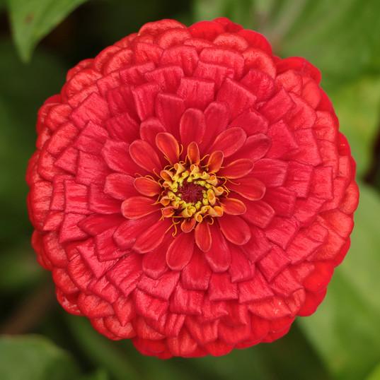 Flowers (8).jpg