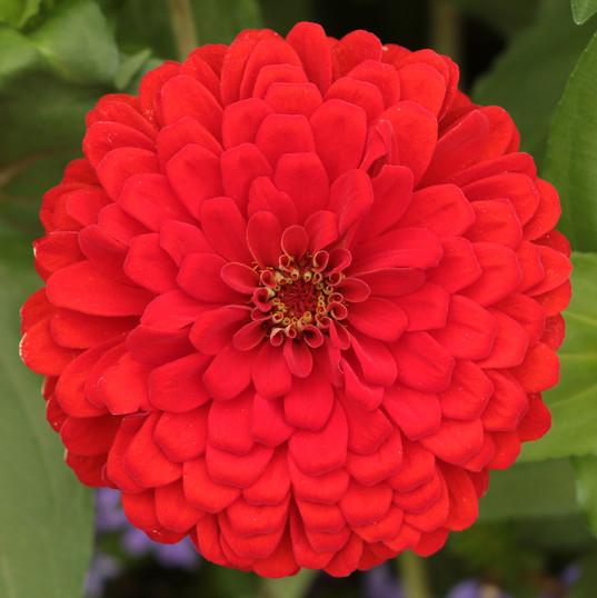 Flowers (9).jpg