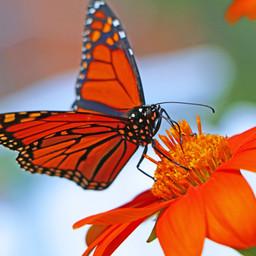 Best Butterfly Photos (5c).jpg