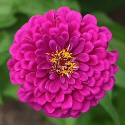 Best Flower Photos (30).jpg