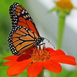 Best Butterfly Photos (4b).jpg