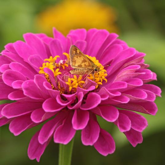 Flowers (11).jpg