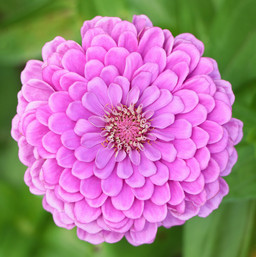 Best Flower Photos (29).jpg
