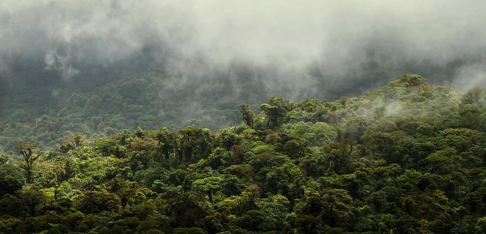 Horský mlžný les v Monte Verde