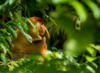 Kuching, brána do tropických pralesů a k bohaté kultuře Bornea