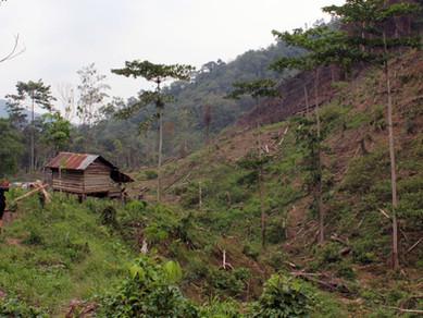 Smutný osud indonéské přírody - Guma, olej a mizející dřevo