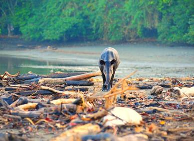 Včem vězí bohatství kostarické přírody?
