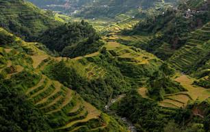 Filipíny_-_Banaue_11.jpg