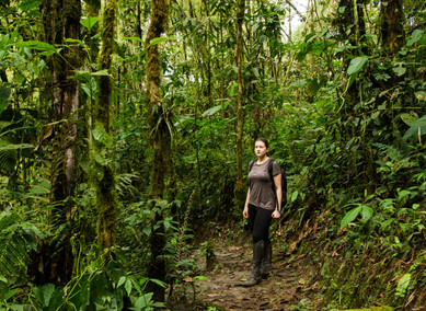 Horské pralesy Minda