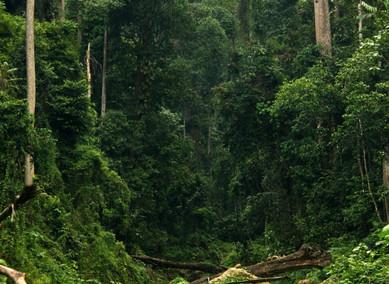 Příběhy z pralesa: Bičovka
