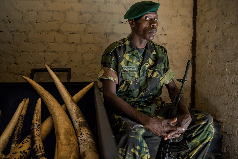 Veteran ranger Jean Claude Mambo Marindo sits beside almost a hundred tusks seized from elephant poachers at Garamba National Park, in the Democratic Republic of the Congo (DRC). The park has lost all its rhinos to poaching for their horns. Now it's under siege for its ivory, mainly by rogue soldiers from national armies and by the terrorist group the Lord's Resistance Army (LRA).