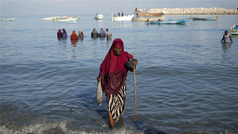 Somali women offload the catch of the day from fishermen at the Bosaso harbour in Puntland [Karel Prinsloo/Adeso]