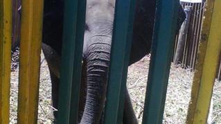 NSPCA CAPTIVE ELEPHANT REPORT