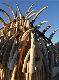 Amid Security Concerns, Poaching Moves Up International Agenda