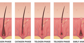 The Hair Growth and Fall Cycle