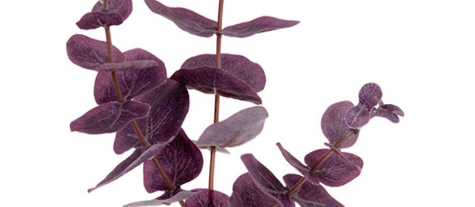 Eukalyptus kan brukes til så mye!