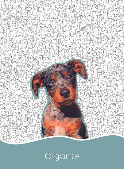 Planner Saúde - Dogs