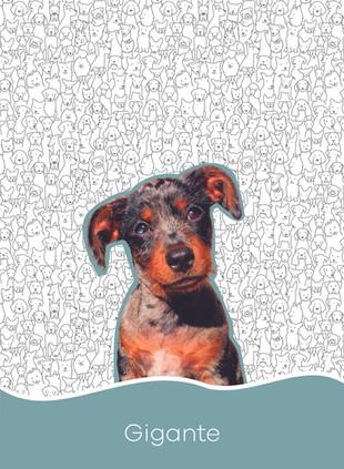 1. Dogs_Prancheta 1.jpg