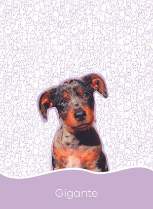 1. Dogs_Prancheta 1 cópia.jpg