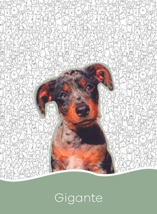 1. Dogs-03.jpg