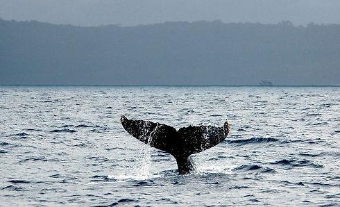 baleias.jpg