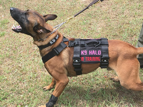 4-Point K9 Patrol Harness,    Great for Searches and lifting