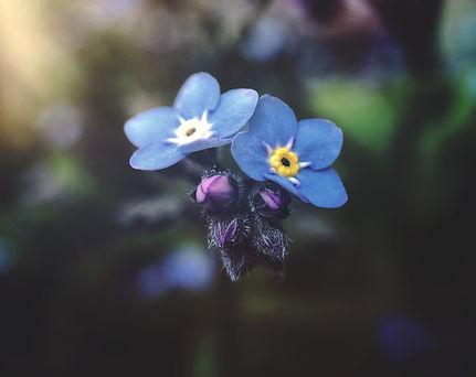 Два цвета еден до друг, на исто гранче