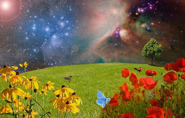 Ледина со цветови и пеперутка, позадина на звезди.