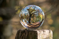 transparent ball reflecting a tree in wood