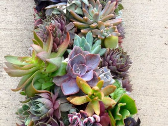 Super Succulents!