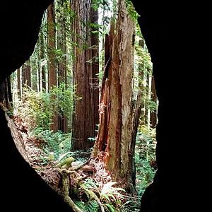 Prairie Creek Redwoods Park