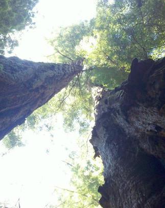 Muir Woods, CA