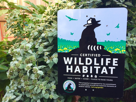 3 Steps to Certify Your Wildlife Habitat
