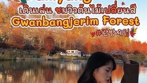 เดินเล่นชมวิวต้นไม้เปลี่ยนสี Damyang Gwanbangjerim Forest