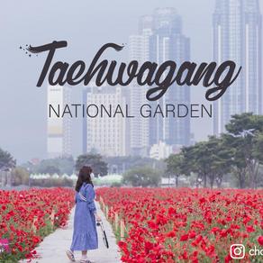 เที่ยวอุทยานจะพักผ่อนก็สบาย จะเดินเล่นก็สดชื่น Taehwagang National Garden