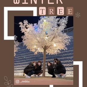 ฤดูหนาวนี้แวะถ่ายรูป Winter Tree กัน