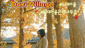 ป่าต้นแปะก๊วยในฤดูใบไม้เปลี่ยนสี Dori Village