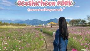 ทุ่งดอกคอสมอสสีชมพูบานสะพรั่ง Seoshicheon Park