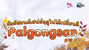 สัมผัสมนต์เสน่ห์ฤดูใบไม้เปลี่ยนสี Palgongsan