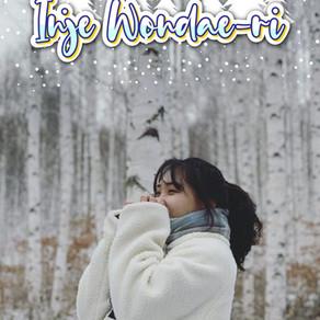 บุกอาณาจักรฤดูหนาวในป่าต้นเบิร์ชที่ Inje Wondae-ri