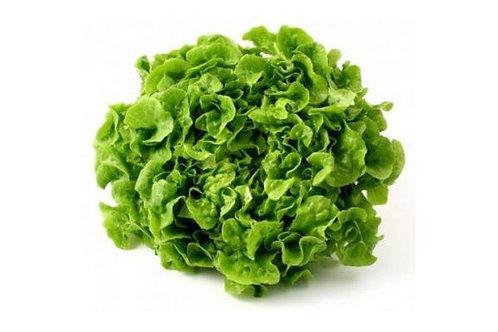 Lechuga Romana verde