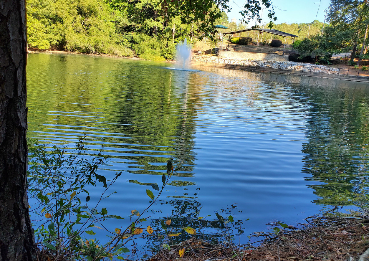 Ponder by the Pond