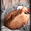 Thumbnail: Miro