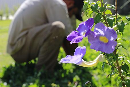 Jardin Paysan Jardinagem e Paisagismo - manutenção e limpeza de jardins - Jundiaí