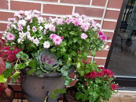 patioflowers4.jpg