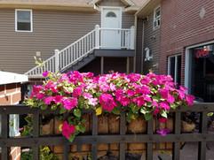 patioflowers5.jpg